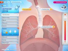 Kids learn human anatomy in How My Body Works App