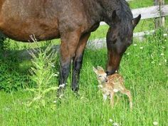 Animals are so kind...God made all creatures that way. Some of us humans have forgotten how we were made. (In His image... )