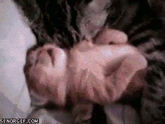 The Best Cat GIFs! | Modern Cat magazine