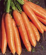 Vitana Carrot....