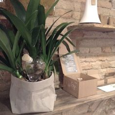 Ciao bella! Read all about this Italian store selling Waterworks on our blog.