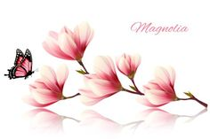 Beauty magnolia branch. Gradients Photoshop. $4.00