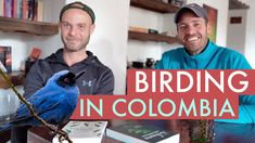 Birding in Colombia according to a Professional Bird Guide – Colombia Birdwatching Colombia Tourism, Trip To Colombia, Colombia Travel, Animal Species, Bird Species, Bird Guides, Viewing Wildlife, Photography Tours, Kayaking
