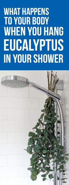What Happens to Your Body When You Hang Eucalyptus in Your Shower