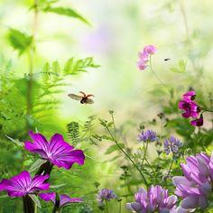 """Ladybird"" by Teuni Stevense, via 500px."