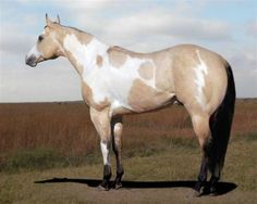 paint horse - Google Search