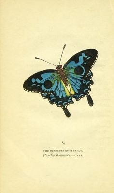 The book of butterflies, sphinges, and moths; i...
