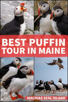 Bold Coast Charter Company's puffin photography tour from Lubec, Maine. The only tour in Maine where you can go ashore and photograph the puffins. Maine Road Trip, East Coast Road Trip, Maine New England, New England Travel, Places To Travel, Places To Go, Travel Destinations, Bar Harbor Maine, Photography Tours