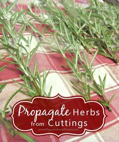 Organic Gardening Learn how to propagate herbs from cuttings and get a fantastic herb garden for pennies Succulent Gardening, Hydroponic Gardening, Hydroponics, Organic Gardening, Container Gardening, Garden Plants, Gardening Tips, Vegetable Gardening, Indoor Gardening