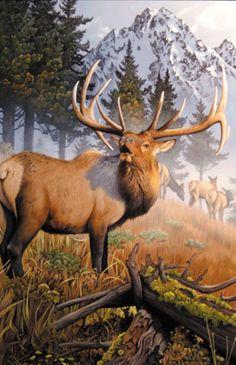 Jerry Gadamus   Elk