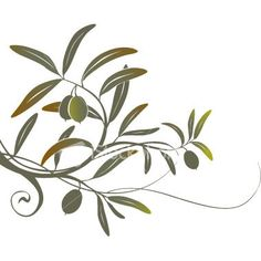 Olive branch tattoo Im thinking about getting.