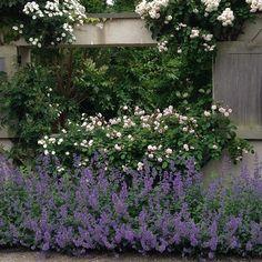 Ina Garten's Garden Photos - How to Recreate the Barefoot Contessa's Garden