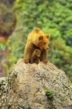 #bears #mom #cub