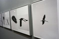 "Juan del Junco. #Exposición Juan del Junco. ""Conceptual Andalusia & Européen en vol"" Museo de Ciencias Naturales #Madrid #Fotogafía #Photography #PHE16 #PHOTOESPAÑA #Arterecord 2016 https://twitter.com/arterecord"