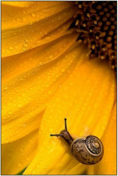 .snail making the journey across this flower