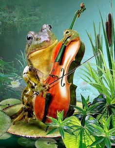 Common Frog playing cello in lily pond Painting - Common Frog playing cello in lily pond Fine Art Print Frosch Illustration, Violin Art, Pond Painting, Frog Pictures, Funny Frogs, Motifs Animal, Frog Art, Lily Pond, Frog And Toad