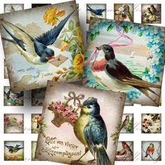 Aged Birds from Vintage Postcards (1) Digital Collage Sheet - 1 Inch Square - Buy 3 sheets and get 4th FREE - Printable Download