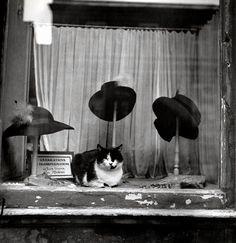 le Chat Au Chapeau. Paris 1937 (Brassaï) (Cat . . . hat . . . yes, I know.--RP)
