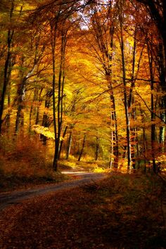 Autumn scene (no location given) by Gruber Bálint on 500px