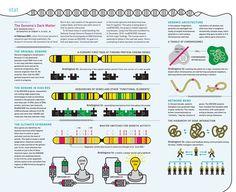 The Genome's Dark Matter