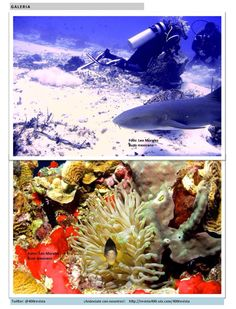 Sección #Galeria de #Revista400 en el número de Junio  fotos de #LeoMorales buzo @400revista http://revista400.wix.com/400revista Revista 400 Junio 2015