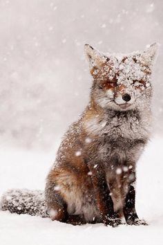 Happy fox playing in the snow!