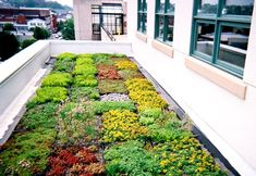PA Dept. of Environmental Protection Headquarters - green roof!!