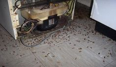 You can find plenty of products which can fight the appearance of cockroaches in your house, but most of them have certain drawback. This is related to the fact that cockroaches might disappear, but in fact there will be undesirable smell which will remain around the house. Also there will be chemicals all over the …