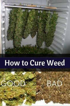 Here you will learn about all things related to learning How to Cure Marijuana for Top Shelf Potency and Taste. Learn about the best ways to cure your cannabis so not only does it taste better but it also is more potent. How to To Make Marijuana Edibles Growing Weed, Cannabis Growing, Growing Plants, Weed Plants, Marijuana Plants, Medical Cannabis, Cannabis Oil, The Cure, Weed Strains