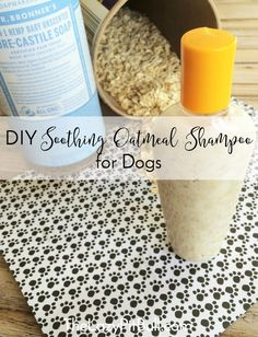 DIY Soothing Oatmeal Shampoo for Dogs DIY Soothing Oatmeal Shampoo for Dogs<br> Hey dog moms! Are you looking for an easy-to-make DIY oatmeal shampoo for your dog? Be sure to check out this simple and effective recipe! Homemade Dog Shampoo, Puppy Shampoo, Diy Shampoo, Homemade Facials, Shampooing Diy, Itchy Dog, Dog Itchy Skin Remedy, Stinky Dog, Homemade Oatmeal