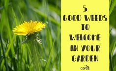 5 Good Weeds To Welcome In Your Garden | Care2 Causes