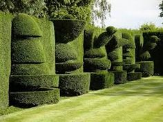 Stunning topiary - years in the making.