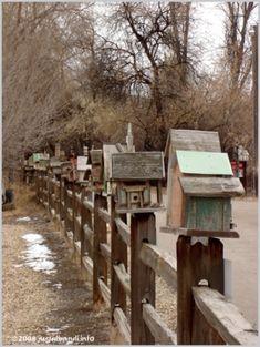 birdhouses by amie