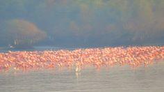 Beauty of Flamingos