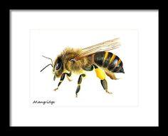 Honey Bee Watercolour Painting Artwork Print Gift  #honeybee #wildlifeart #natureartist #wildlifeartist