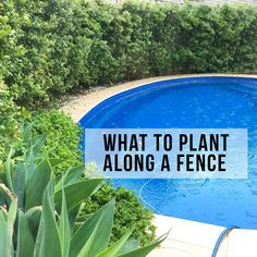 If you have an ugly bare fence, then a bit of greenery will always change the entire look. But what should you plant along it? I do get asked what my plants are (a couple of photos are below). And I am pretty basic in the garden, but I have… Small Courtyard Gardens, Front Courtyard, Outdoor Gardens, Courtyard Ideas, Landscaping Along Fence, Small Backyard Landscaping, Backyard Plants, Fence Plants, Courtyards