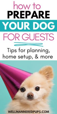 How to prepare your dog for guests coming over - Tips for planning & preparation before the party, during, and after. Plus tips for setting up your home. Dog Owners, Dog Stuff, Pup, Life Hacks, How To Plan, Dogs, Party, Dog Baby, Pet Dogs