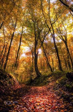 E The autumn forest by Andy58/András Schafer
