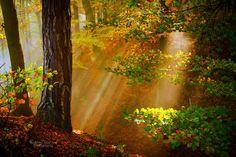 Photograph Corner of a meadow by serban bogdan on Photo Corners, Anime Art Girl, Fall Season, Mists, Nature Photography, Waterfall, Art Gallery, Tree Garden, Country Roads