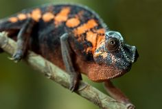 """Chameleon at the Intersection Point  Who Do I Serve and What Do I Say?  http://www.thatintersectionpoint.com/    To Religious leaders,   Bishops, Popes, Priests, and Ministers:  """"There are many ways  to the top of Mount Fuji,  to hell and heaven, is not   beyond the clouds,  just beyond the fear.  Don't cause the pain,   mirror neurons give   you the ability to imagine."""""""