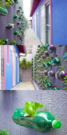 Vertical garden in Brazil.  Ask your Brazilian au pair to help your kids recreate this great way to reuse old soda bottles and make the world a little greener.