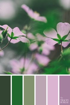 Purple Flowers Color Palette | Green & Purple Color Scheme | Color Palette Inspiration | Color Scheme | For the Home | Branding Color Ideas | Wedding Color Ideas