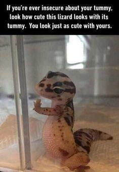 Cute lizard tummy Funny Animal Pictures of The Day – 25 Pics Funny Animal Jokes, Cute Funny Animals, Funny Cute, Funny Work, Animal Humor, Animal Quotes, Funny Minion, Funny Stuff, Cartoon Jokes