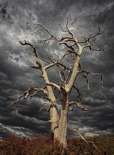 Creepy Old Tree Nature Ideas All Nature, Amazing Nature, Nature Tree, Mother Earth, Mother Nature, Sky Tattoos, Weird Trees, Lone Tree, Unique Trees