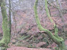 The Birks of Aberfeldy Honeymoon In Scotland, Robert Burns, Close My Eyes