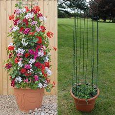 Idea for sweet peas in wine barrel planter: