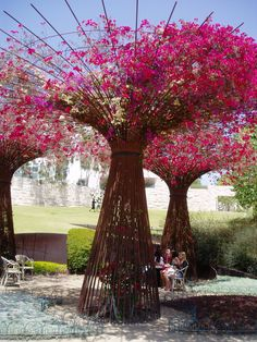 Beautiful bougainvilleas at Getty Center