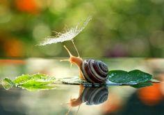 Fotógrafo mostra que caracóis vivem em um mundo mágico ~ Ovelhas Voadoras