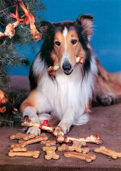 My Colly was called Leo. Looked just like Lassie.