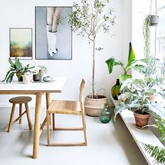 Total green envy and I spy a belly basket amongst this beautiful light filled space via Pinterest #frankiesayrelax #greenenvy #naturallight #greenery #baskets #home #styling #homewares